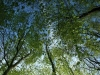 stromy-1