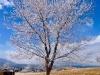 stromy-3