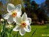 kvetiny-1