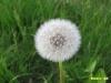 kvetiny-3