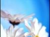 kvetiny-4