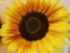 kvetiny-5