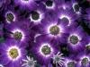 kvetiny-6