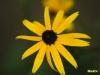 kvetiny-7