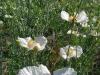 kvetiny-8